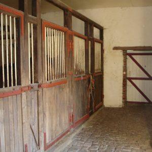 ecurie-jeunes-chevaux